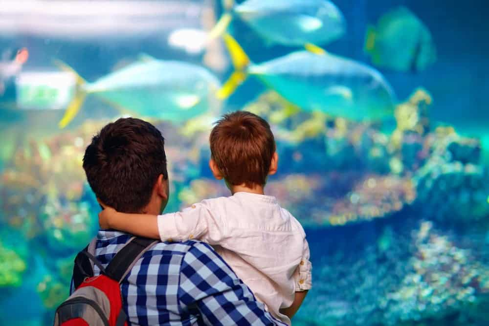 A father and son admiring fish at an aquarium.